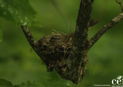 parc-montagne-du-diable-ornithologie-1