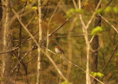 parc-montagne-du-diable-ornithologie-5