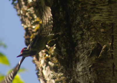 parc-montagne-du-diable-ornithologie