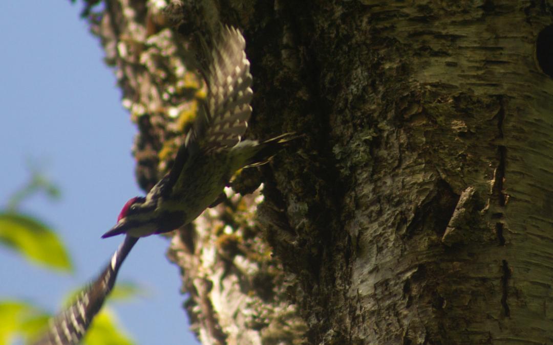 L'ornithologie
